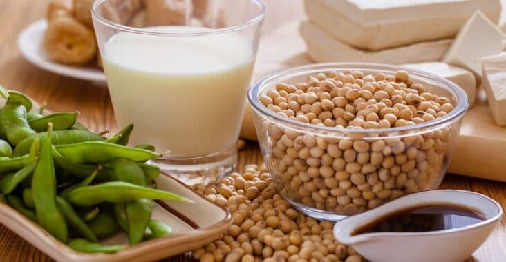 meilleurs produits protéines végétales